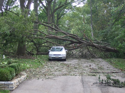 Tree fallen over a road